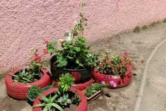 mini-jardín